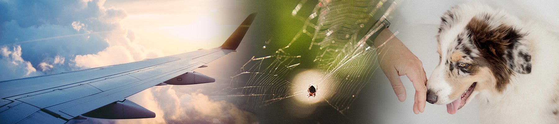 Spinne, Flugzeug